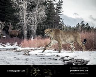 Giant cheetah (Acinonyx pardinensis)