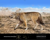 Dire wolf  (Aenocyon dirus)