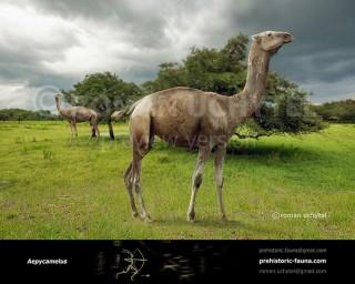 Aepycamelus giraffinus