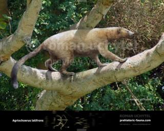 Agriochoerus antiquus