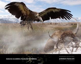 Aiolornis incredibilis (Teratornis incredibilis)