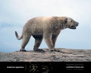 Amphicyon giganteus