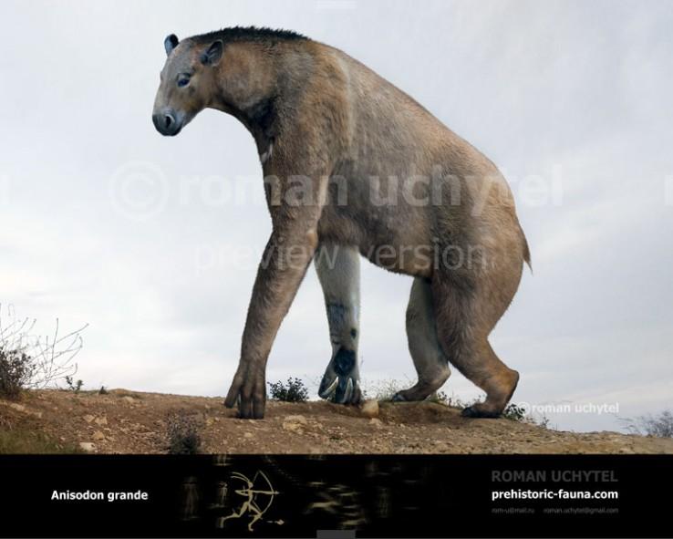 Anisodon (Chalicotherium) grande