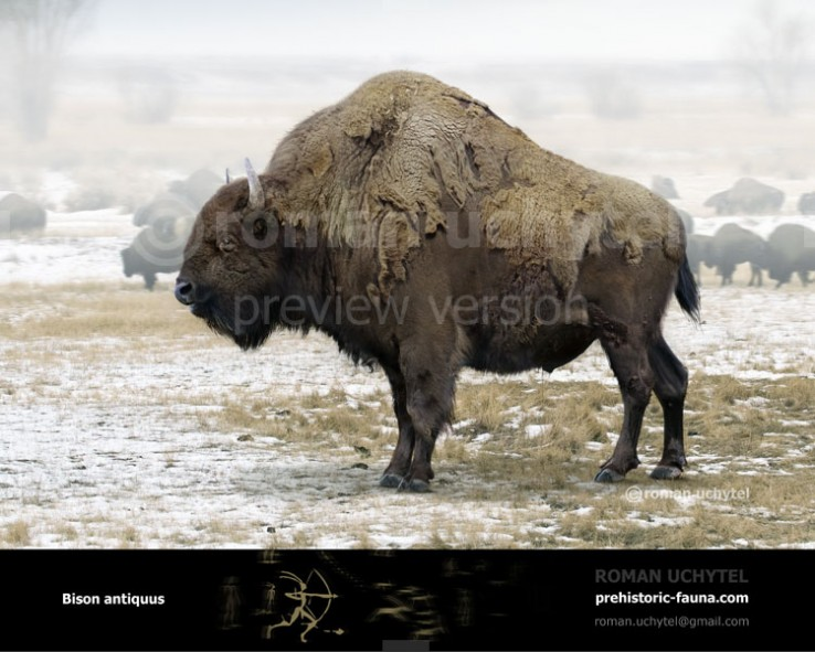 Image of: Fauna Bison Antiquus ancient Bison Blue Line Wordpresscom Extinct Animals Images Prehistoric Fauna Reconstructions