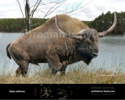 Bison latifrons (Giant North American Bison)