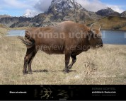 Bison sivalensis