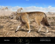 Dire wolf  (Canis dirus)