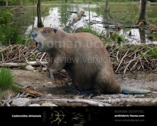 Giant Beaver (Castoroides ohioensis)