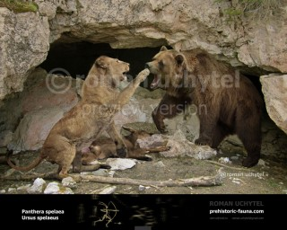 Panthera spelaea and Ursus spelaeus