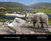 Cyprus dwarf elephant