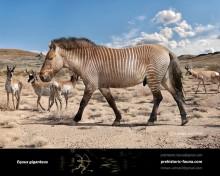 Equus giganteus