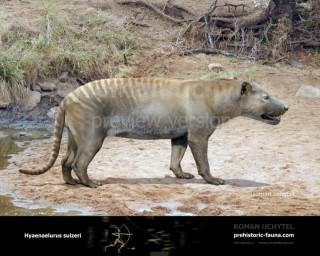 Hyaenaelurus