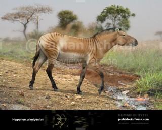 Hipparion primigenium