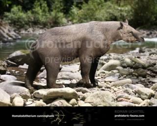 Homalodotherium cunninghami