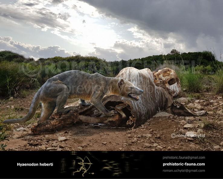Hyaenodon heberti