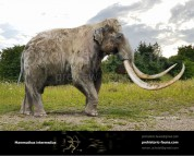 Mammuthus intermedius