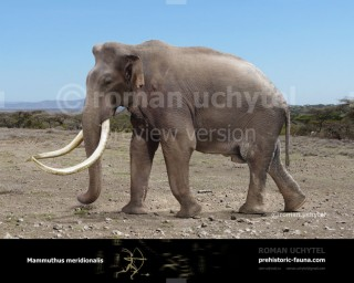 Southern mammoth (Archidiskodon meridionalis)