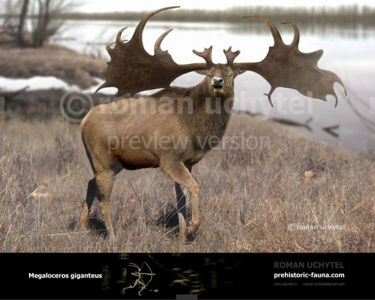 Irish elk (old version)
