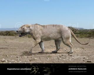 Megistotherium osteothlastes (?Hyainailouros osteothlastes)