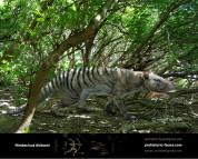 Nimbacinus dicksoni