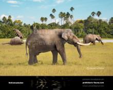 Stegomastodon and Notiomastodon