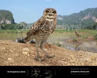 Cuban Giant Owl (Ornimegalonyx oteroi)