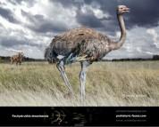 Giant Pleistocene ostrich-like bird (Pachystruthio dmanisensis)