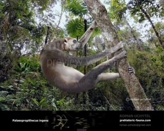 Palaeopropithecus