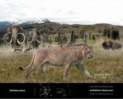 American lion (Panthera atrox)