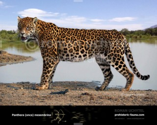 Pleistocene South American jaguar (Panthera onca mesembrina)