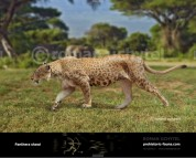 Panthera shawi