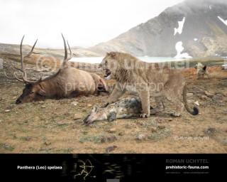Panthera spelaea (Cave lion)