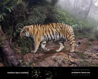 Wanhsien tiger