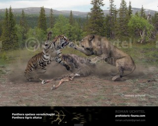 East Siberian cave lion and Siberian tiger