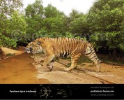 Trinil tiger (Panthera tigris trinilensis)