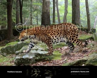 Panthera toscana