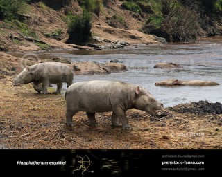 Phosphatherium escuillei