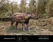 Plagiolophus annectens