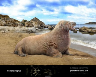 Giant Walrus (Pontolis magnus)