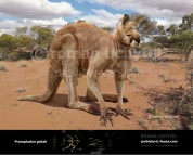 Short-Faced Kangaroo (Procoptodon goliah)