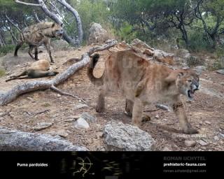 Eurasian Puma (Puma pardoides)