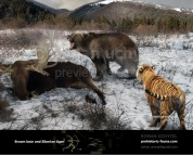 Brown bear and Siberian tiger