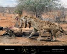 Saber-toothed tiger (Smilodon fatalis)