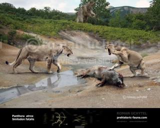 Panthera (Leo) atrox & Smilodon