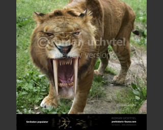 Smilodon populator face