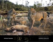Smilodon populator (family)