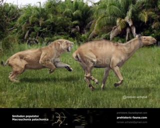 Smilodon and Macrauchenia