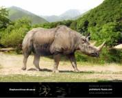Etruscan rhinoceros (Stephanorhinus etruscus)