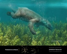 Aquatic marine sloth (Thalassocnus)