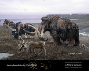 The most recent survival of all known mammoth populations (Wrangel Island)